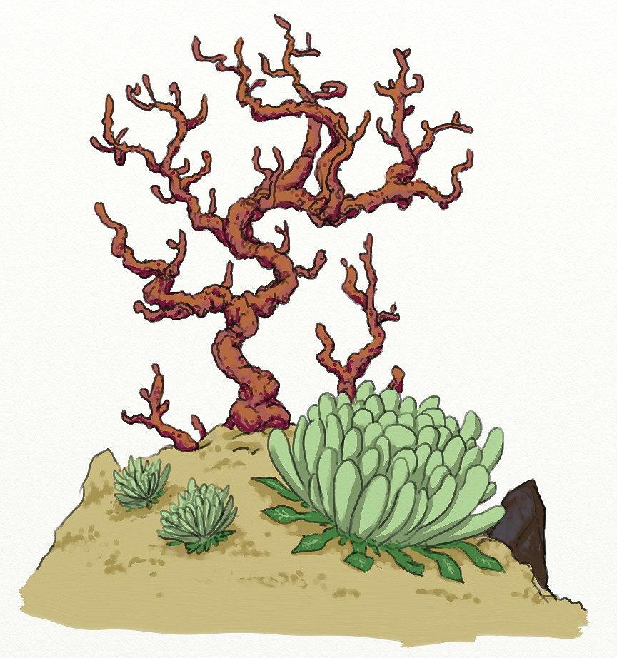 coral-plant-a-02.jpg