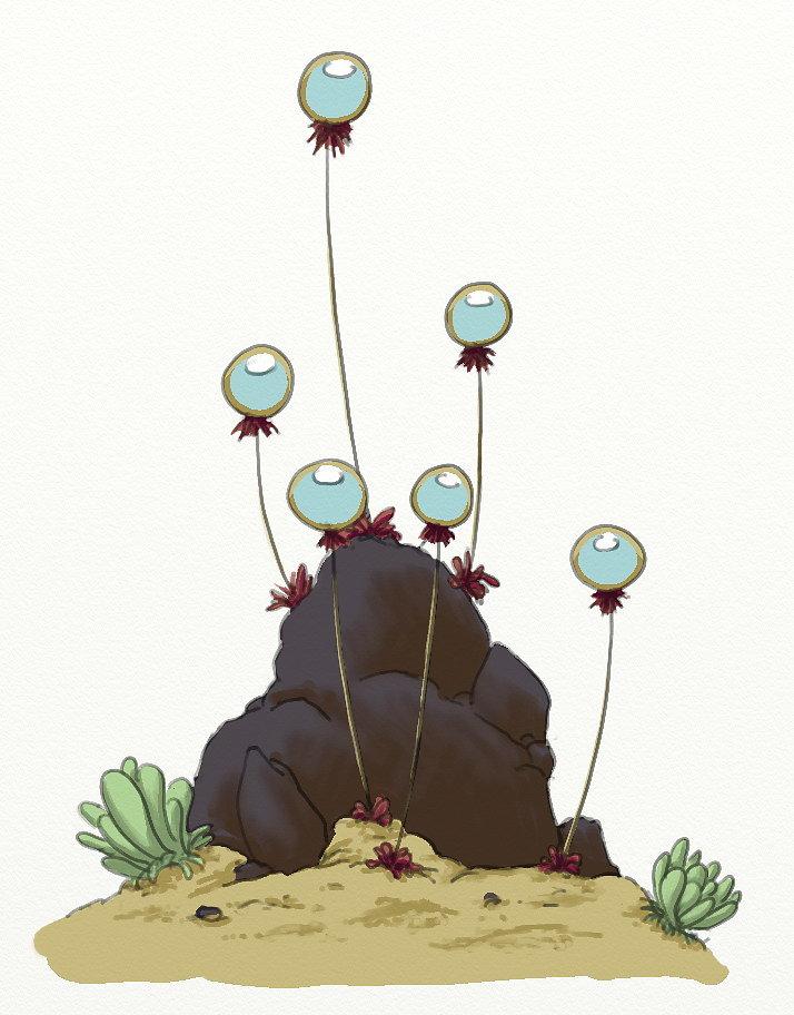 coral-plant-d-02.jpg